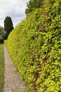 Uw tuin in relatie met de buren